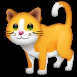Cat whatsapp emoji