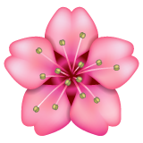 Cherry Blossom whatsapp emoji